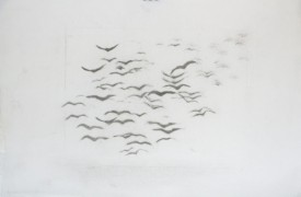 French birds (b/w)